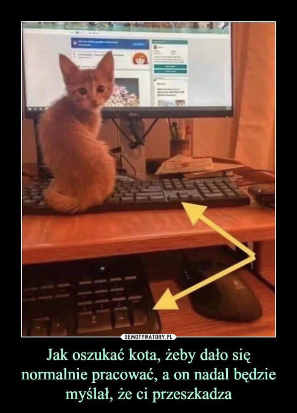 Jak oszukać kota, żeby dało się normalnie pracować, a on nadal będzie myślał, że ci przeszkadza –