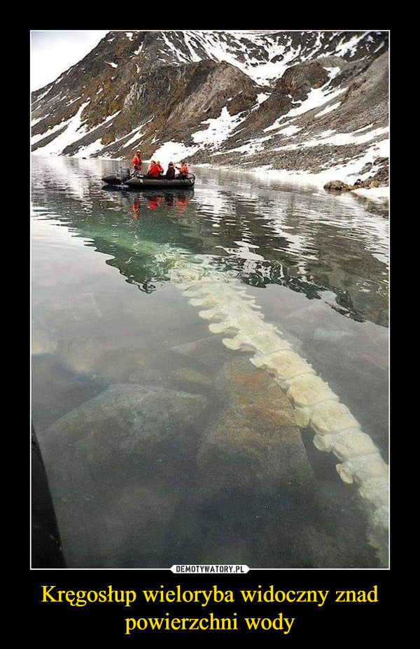 Kręgosłup wieloryba widoczny znad powierzchni wody –