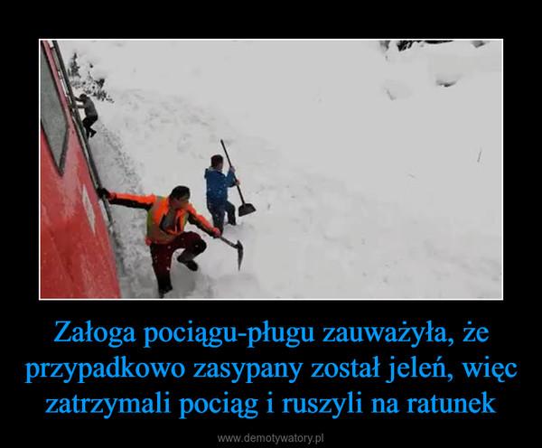 Załoga pociągu-pługu zauważyła, że przypadkowo zasypany został jeleń, więc zatrzymali pociąg i ruszyli na ratunek –