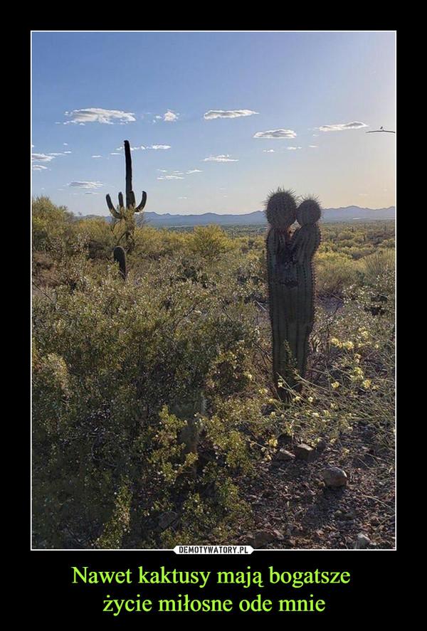 Nawet kaktusy mają bogatsze życie miłosne ode mnie –