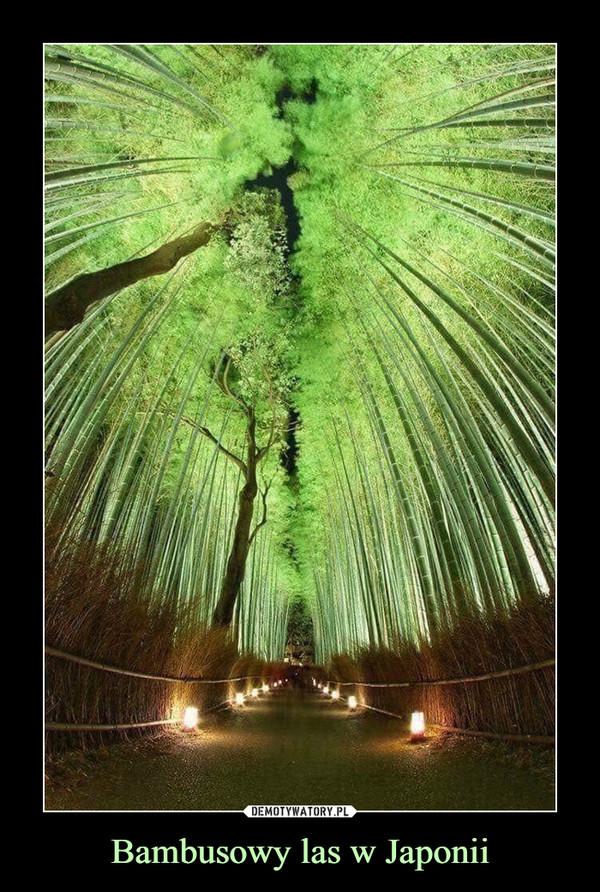 Bambusowy las w Japonii –