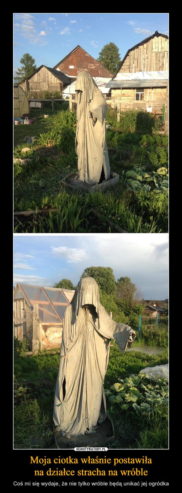 Moja ciotka właśnie postawiłana działce stracha na wróble – Coś mi się wydaje, że nie tylko wróble będą unikać jej ogródka