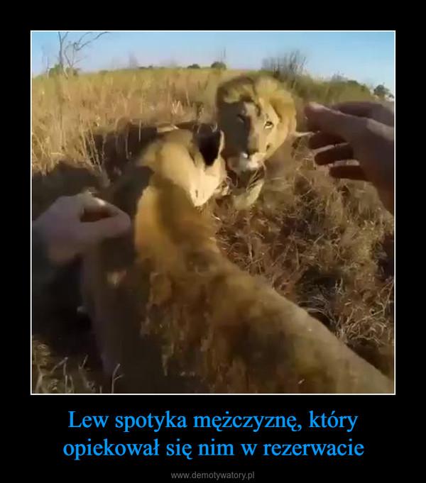 Lew spotyka mężczyznę, który opiekował się nim w rezerwacie –