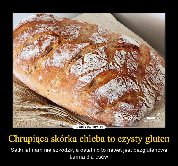 Chrupiąca skórka chleba to czysty gluten – Setki lat nam nie szkodził, a ostatnio to nawet jest bezglutenowa karma dla psów