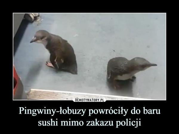 Pingwiny-łobuzy powróciły do baru sushi mimo zakazu policji –