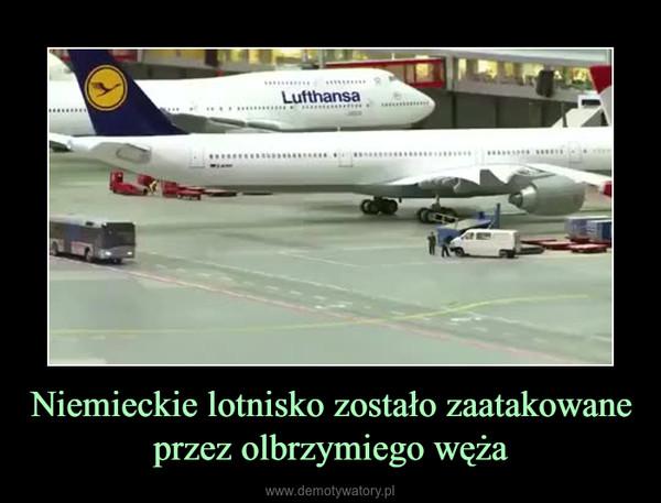 Niemieckie lotnisko zostało zaatakowane przez olbrzymiego węża –