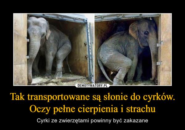 Tak transportowane są słonie do cyrków. Oczy pełne cierpienia i strachu – Cyrki ze zwierzętami powinny być zakazane