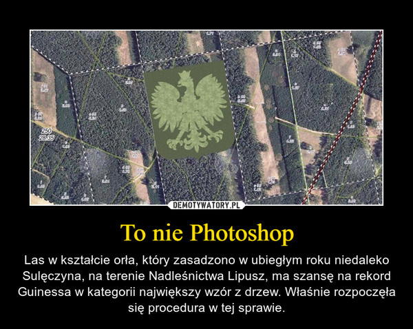 To nie Photoshop – Las w kształcie orła, który zasadzono w ubiegłym roku niedaleko Sulęczyna, na terenie Nadleśnictwa Lipusz, ma szansę na rekord Guinessa w kategorii największy wzór z drzew. Właśnie rozpoczęła się procedura w tej sprawie.