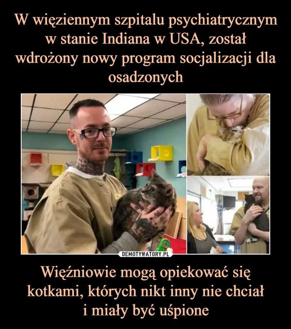 Więźniowie mogą opiekować się kotkami, których nikt inny nie chciałi miały być uśpione –