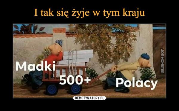 –  Madki 500+ Polacy