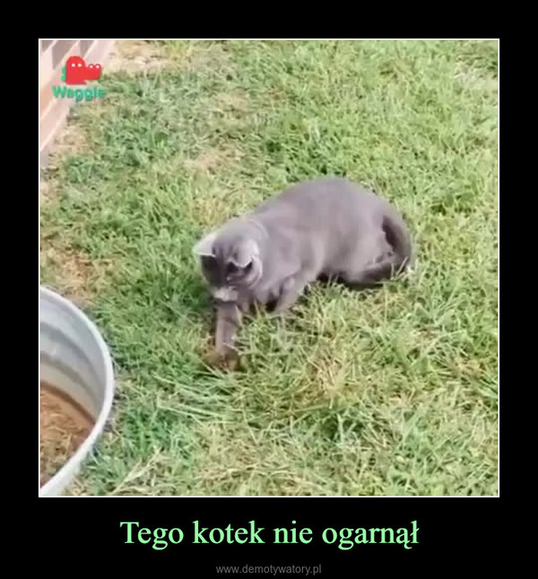 Tego kotek nie ogarnął –