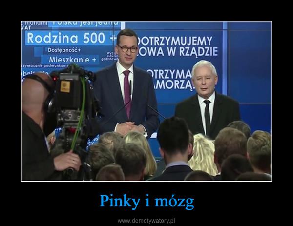 Pinky i mózg –