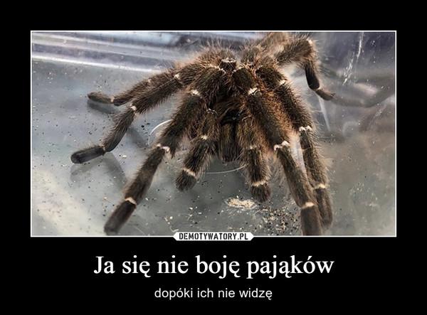 Ja się nie boję pająków – dopóki ich nie widzę