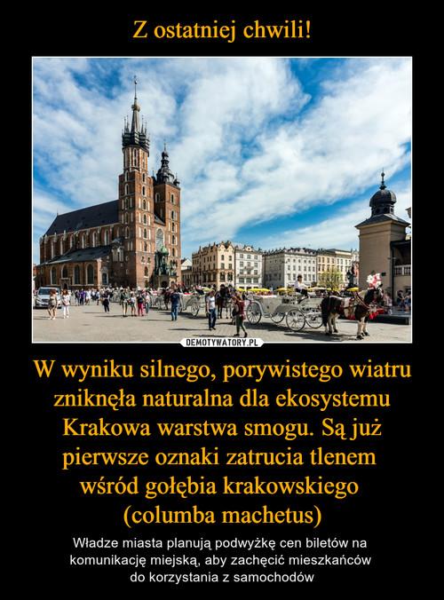 Z ostatniej chwili! W wyniku silnego, porywistego wiatru zniknęła naturalna dla ekosystemu Krakowa warstwa smogu. Są już pierwsze oznaki zatrucia tlenem  wśród gołębia krakowskiego  (columba machetus)