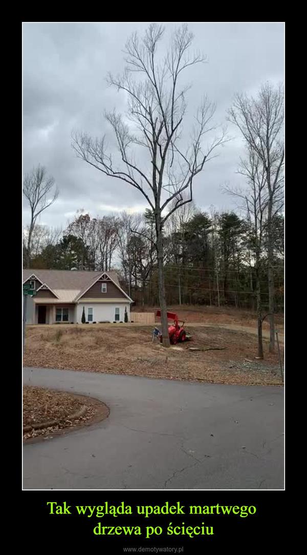 Tak wygląda upadek martwego drzewa po ścięciu –