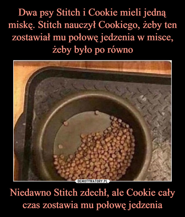Niedawno Stitch zdechł, ale Cookie cały czas zostawia mu połowę jedzenia –