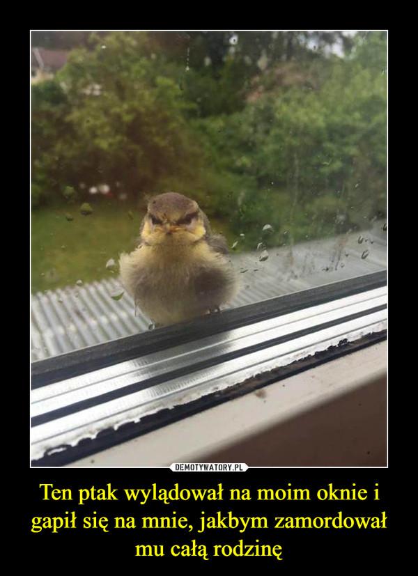 Ten ptak wylądował na moim oknie i gapił się na mnie, jakbym zamordował mu całą rodzinę –