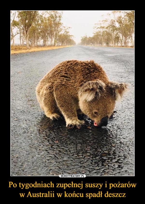 Po tygodniach zupełnej suszy i pożarów w Australii w końcu spadł deszcz –