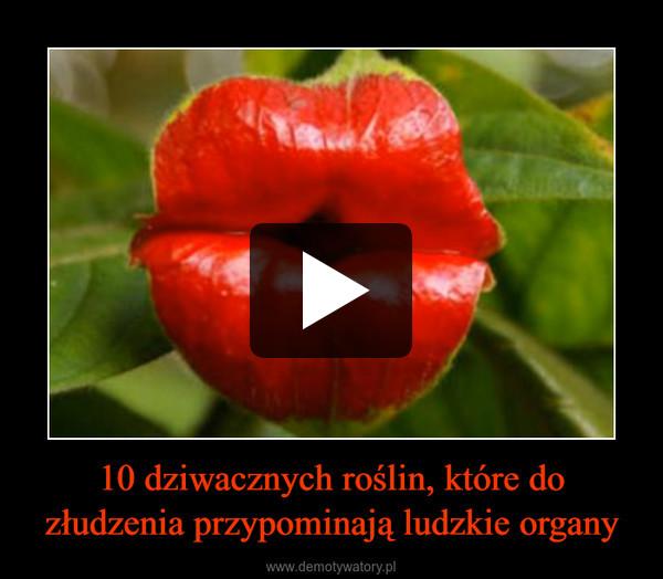 10 dziwacznych roślin, które do złudzenia przypominają ludzkie organy –