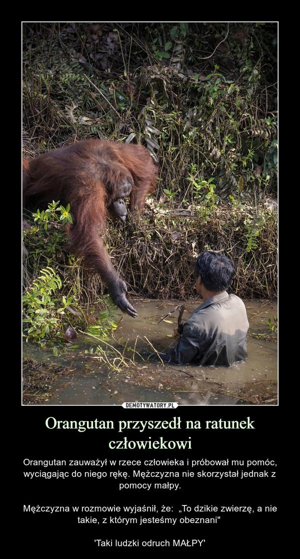 """Orangutan przyszedł na ratunek człowiekowi – Orangutan zauważył w rzece człowieka i próbował mu pomóc, wyciągając do niego rękę. Mężczyzna nie skorzystał jednak z pomocy małpy.Mężczyzna w rozmowie wyjaśnił, że:  """"To dzikie zwierzę, a nie takie, z którym jesteśmy obeznani"""" 'Taki ludzki odruch MAŁPY'"""