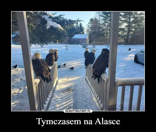 Tymczasem na Alasce –