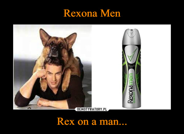 Rex on a man... –