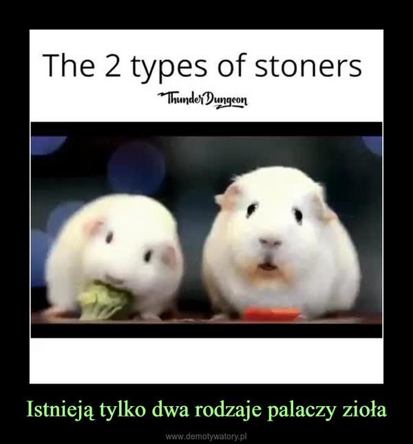 Istnieją tylko dwa rodzaje palaczy zioła –