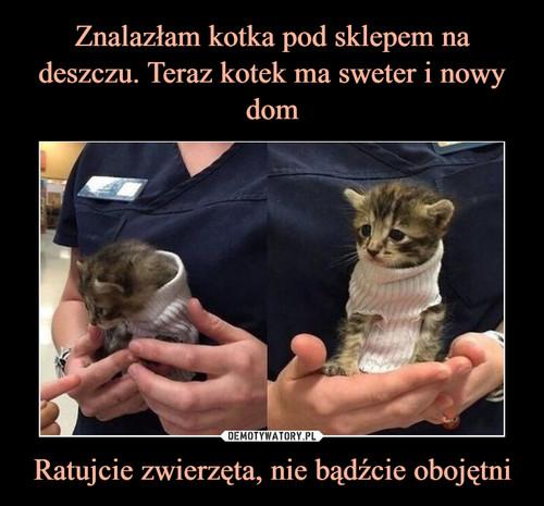 Znalazłam kotka pod sklepem na deszczu. Teraz kotek ma sweter i nowy dom Ratujcie zwierzęta, nie bądźcie obojętni