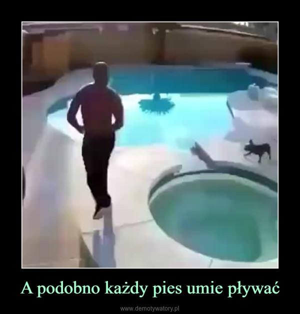 A podobno każdy pies umie pływać –