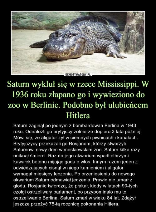 Saturn wykluł się w rzece Mississippi. W 1936 roku złapano go i wywieziono do zoo w Berlinie. Podobno był ulubieńcem Hitlera