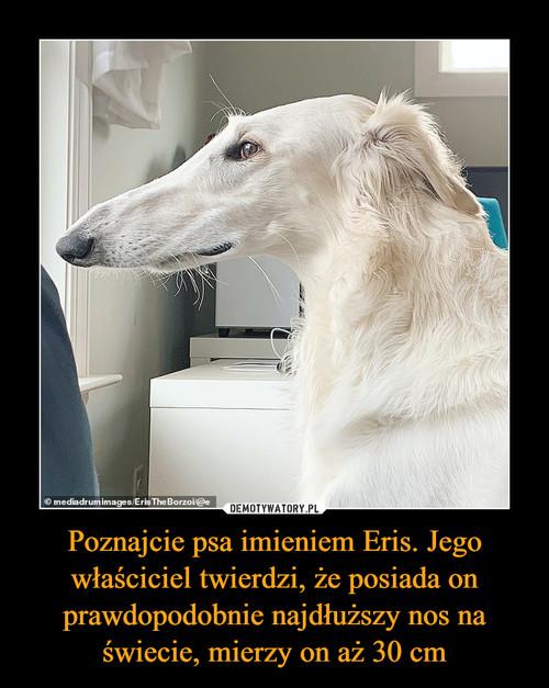 Poznajcie psa imieniem Eris. Jego właściciel twierdzi, że posiada on prawdopodobnie najdłuższy nos na świecie, mierzy on aż 30 cm