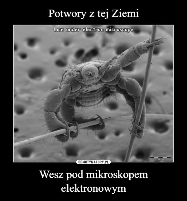 Wesz pod mikroskopem elektronowym –