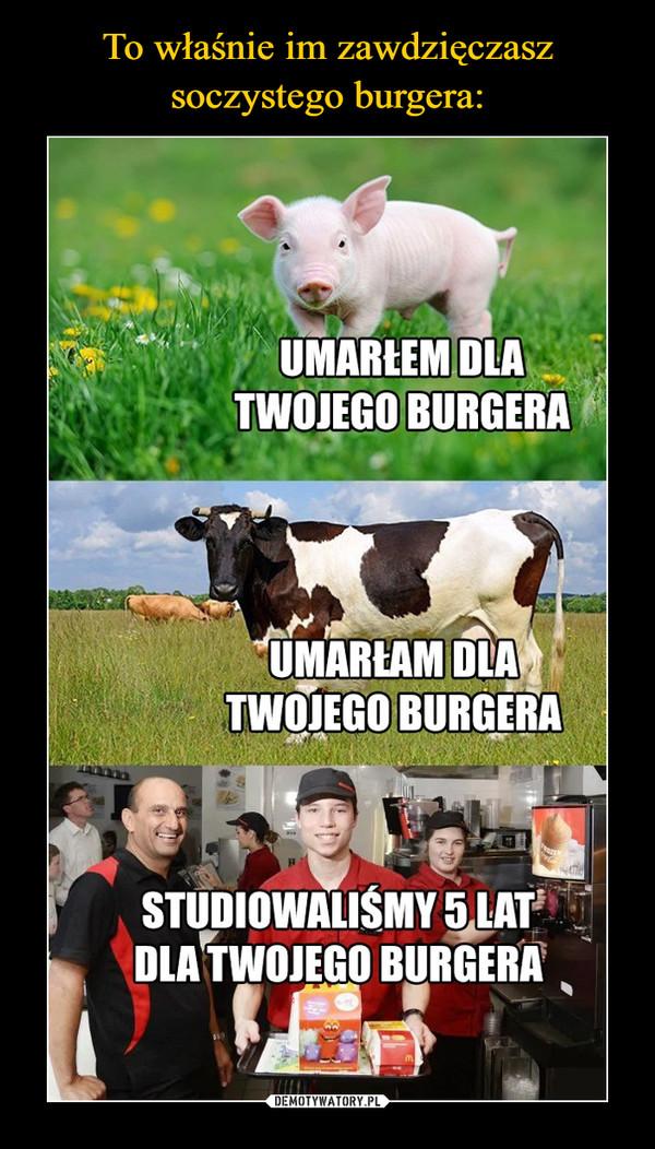 –  Umarłem dla twojego burgera Umarłam dla twojego burgera Studiowaliśmy 5 lat dla twojego burgera
