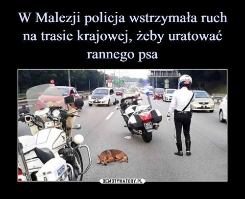 W Malezji policja wstrzymała ruch na trasie krajowej, żeby uratować rannego psa