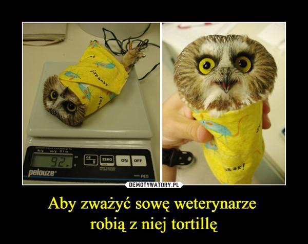 Aby zważyć sowę weterynarze robią z niej tortillę –