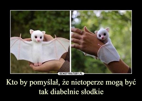 Kto by pomyślał, że nietoperze mogą być tak diabelnie słodkie –