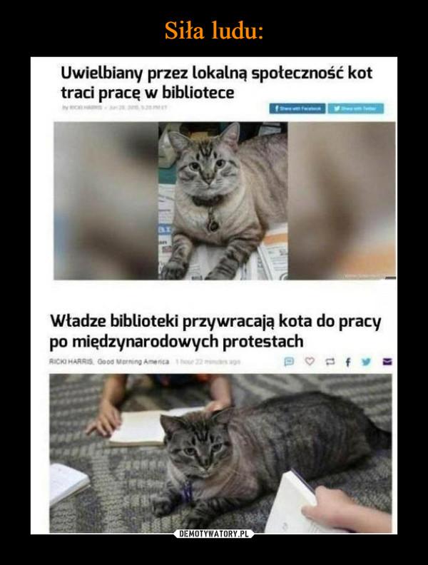 –  Uwielbiany przez lokalną społeczność kottraci prace w biblioteceWładze biblioteki przywracają kota do pracypo międzynarodowych protestach