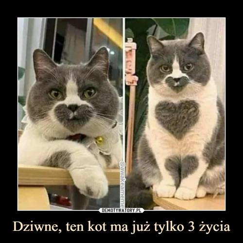 Dziwne, ten kot ma już tylko 3 życia