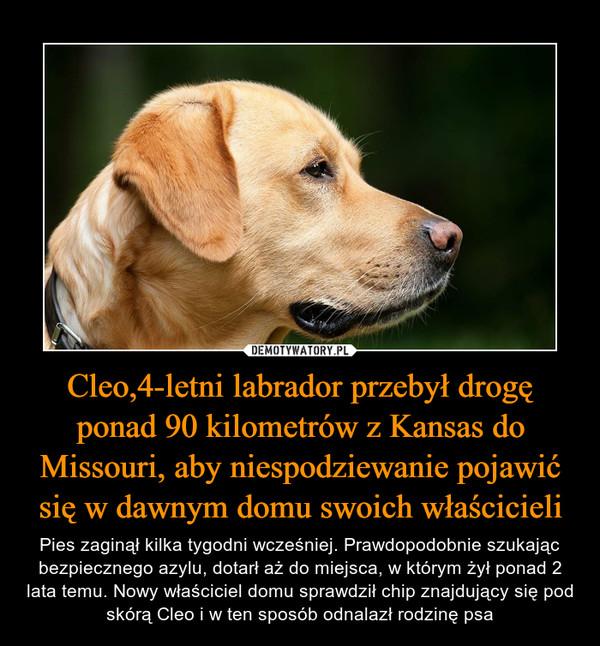 Cleo,4-letni labrador przebył drogę ponad 90 kilometrów z Kansas do Missouri, aby niespodziewanie pojawić się w dawnym domu swoich właścicieli – Pies zaginął kilka tygodni wcześniej. Prawdopodobnie szukając bezpiecznego azylu, dotarł aż do miejsca, w którym żył ponad 2 lata temu. Nowy właściciel domu sprawdził chip znajdujący się pod skórą Cleo i w ten sposób odnalazł rodzinę psa