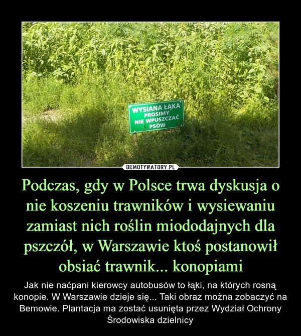 Podczas, gdy w Polsce trwa dyskusja o nie koszeniu trawników i wysiewaniu zamiast nich roślin miododajnych dla pszczół, w Warszawie ktoś postanowił obsiać trawnik... konopiami – Jak nie naćpani kierowcy autobusów to łąki, na których rosną konopie. W Warszawie dzieje się... Taki obraz można zobaczyć na Bemowie. Plantacja ma zostać usunięta przez Wydział Ochrony Środowiska dzielnicy Wysiana łąka prosimy nie wpuszczać psów