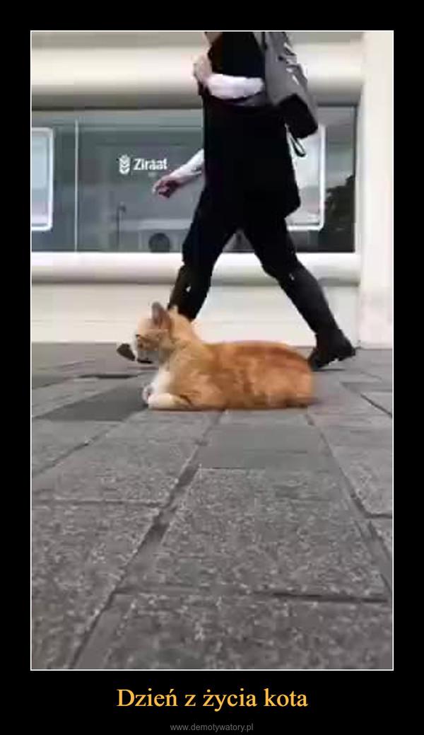 Dzień z życia kota –