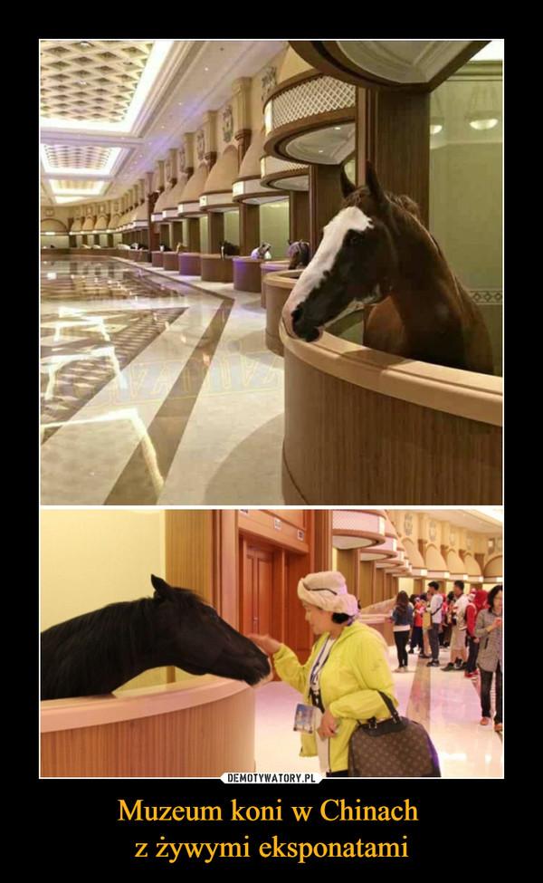 Muzeum koni w Chinach z żywymi eksponatami –