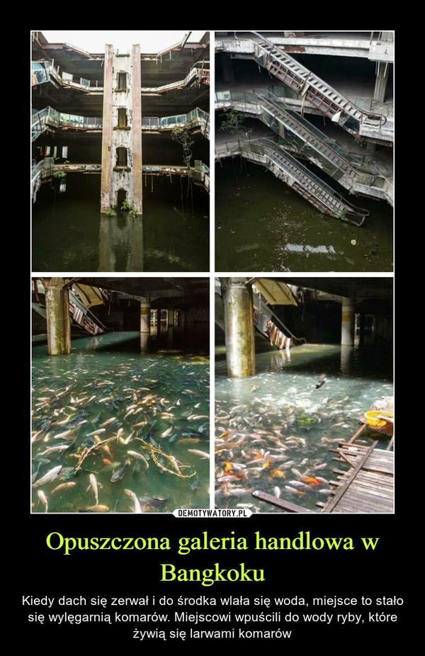 Opuszczona galeria handlowa w Bangkoku – Kiedy dach się zerwał i do środka wlała się woda, miejsce to stało się wylęgarnią komarów. Miejscowi wpuścili do wody ryby, które żywią się larwami komarów
