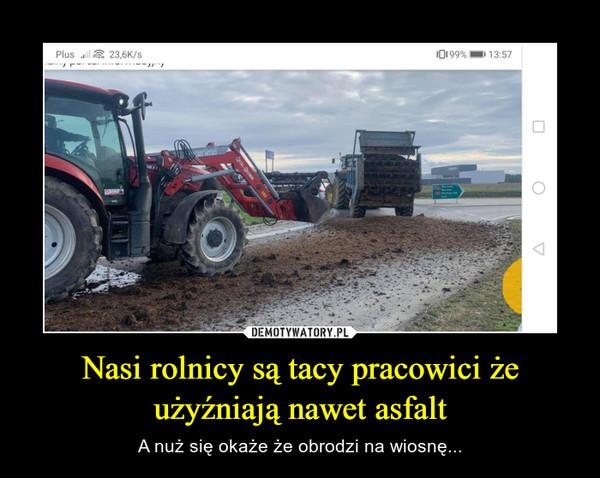 Nasi rolnicy są tacy pracowici że użyźniają nawet asfalt – A nuż się okaże że obrodzi na wiosnę...