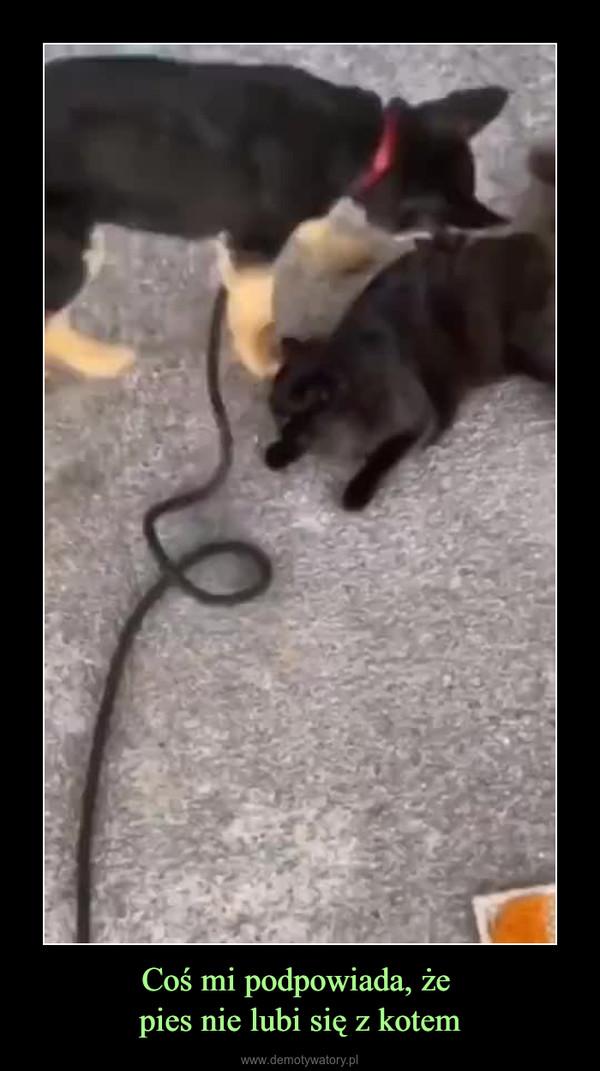 Coś mi podpowiada, że pies nie lubi się z kotem –