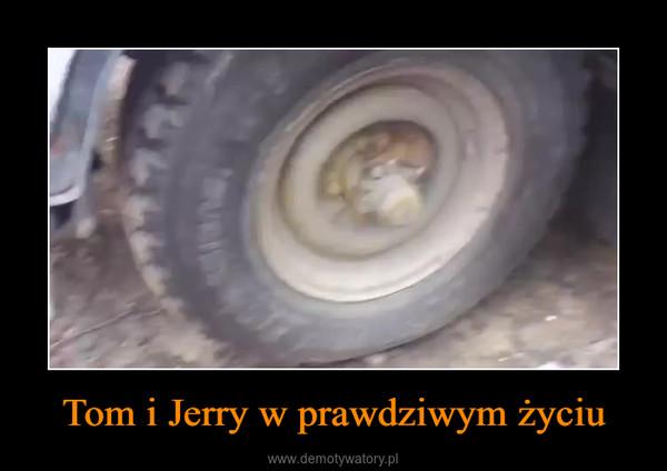Tom i Jerry w prawdziwym życiu –