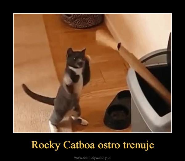 Rocky Catboa ostro trenuje –