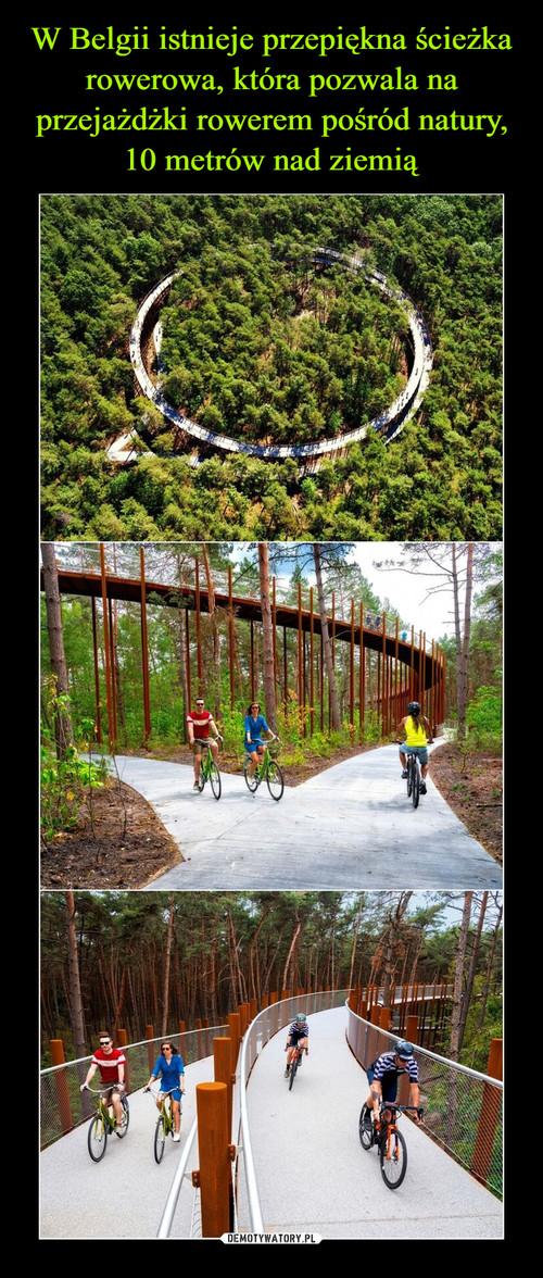 W Belgii istnieje przepiękna ścieżka rowerowa, która pozwala na przejażdżki rowerem pośród natury, 10 metrów nad ziemią