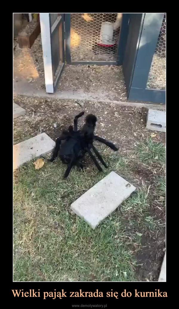 Wielki pająk zakrada się do kurnika –