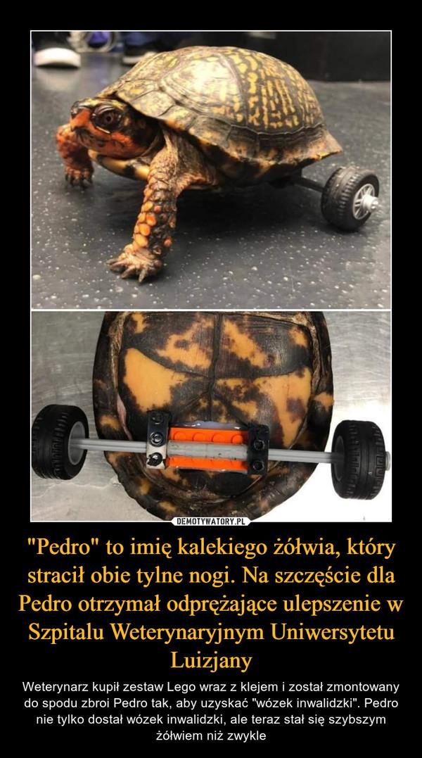 """""""Pedro"""" to imię kalekiego żółwia, który stracił obie tylne nogi. Na szczęście dla Pedro otrzymał odprężające ulepszenie w Szpitalu Weterynaryjnym Uniwersytetu Luizjany – Weterynarz kupił zestaw Lego wraz z klejem i został zmontowany do spodu zbroi Pedro tak, aby uzyskać """"wózek inwalidzki"""". Pedro nie tylko dostał wózek inwalidzki, ale teraz stał się szybszym żółwiem niż zwykle"""